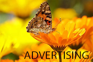 Advert design Galway